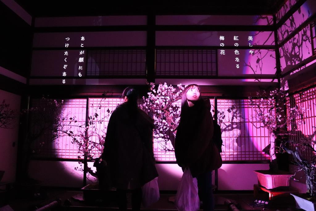デジタル映像で幻想的に演出された盆梅と刀剣展=大阪市北区の大阪天満宮