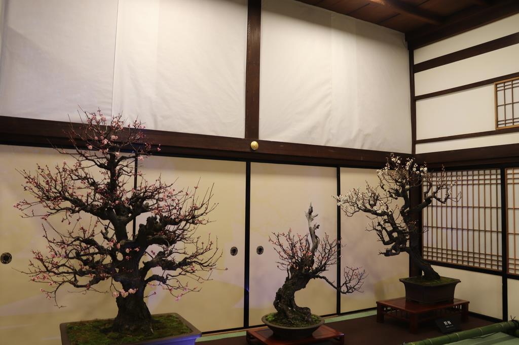 照明をつけると従来と変わらない盆梅展に=大阪市北区の大阪天満宮